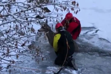 Firefighters Pull Deer Out of Icy Lake!