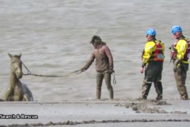 Rescuer`s Free Horse From Mud!